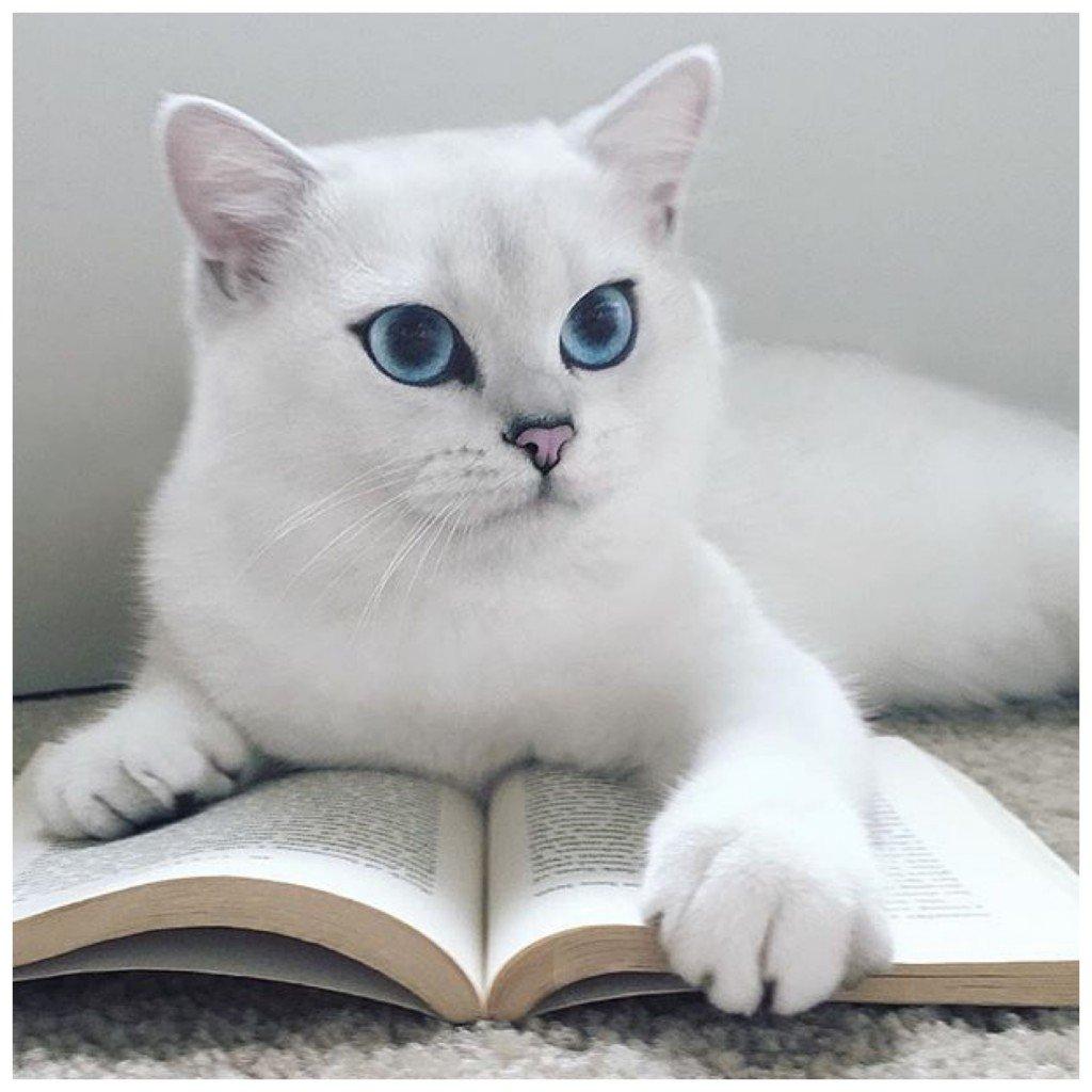 Коби чете