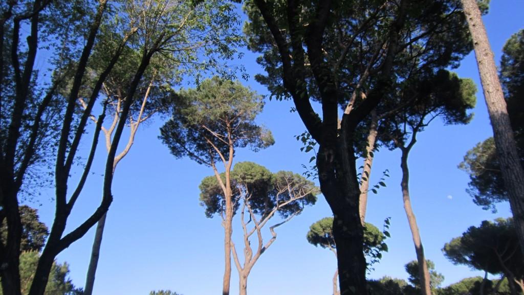 дървета в Рим