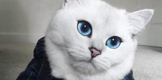 красива котка