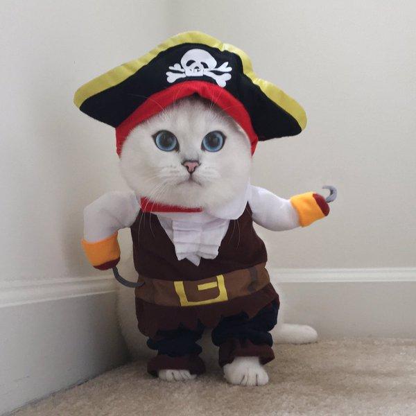 Коби пират