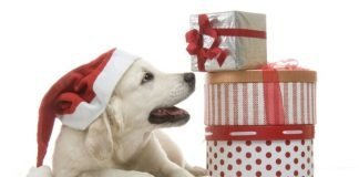 идеи за подарък за Коледа