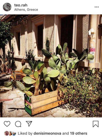 cactus-in-athens