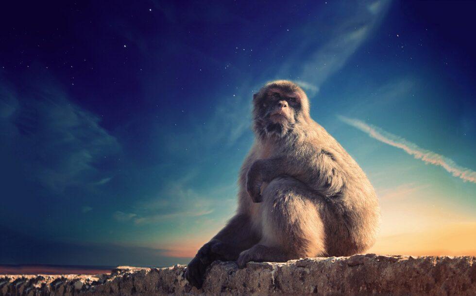 маймуна Гибралтар