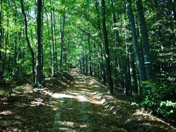 priroden-park-bulgarka