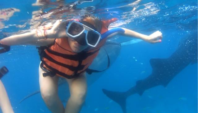 гмуркане с китови акули