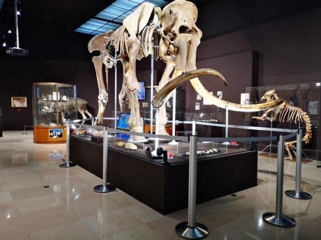 Антропологичен музей в Монако