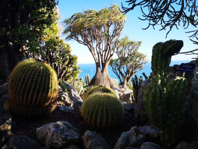 кактуси в Екзотичната градина
