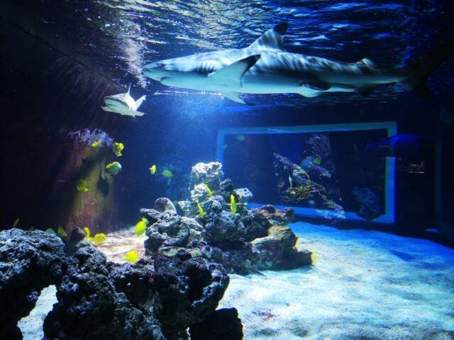 Лагуната на акулите