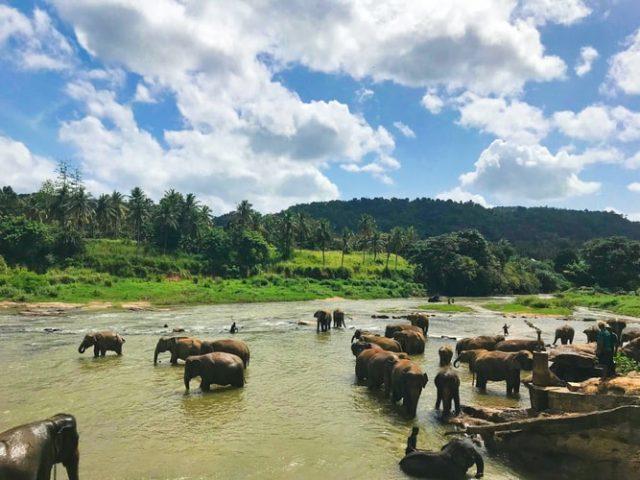 сафари в Шри Ланка