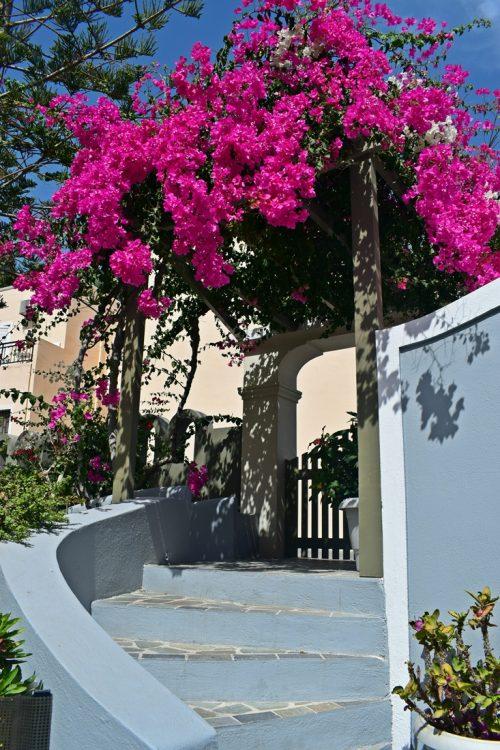 хотел в Санторини с цветя