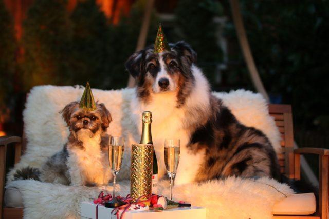 забавни пожелания за Нова година