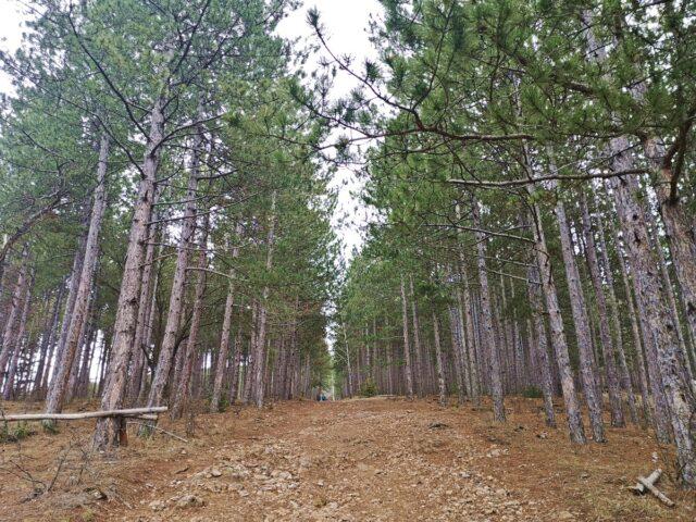 пътека към Кремиковски манастир