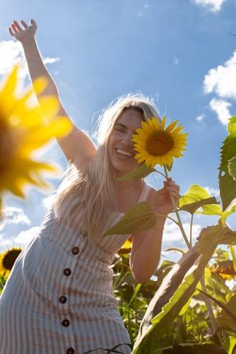 слънчоглед Цветница