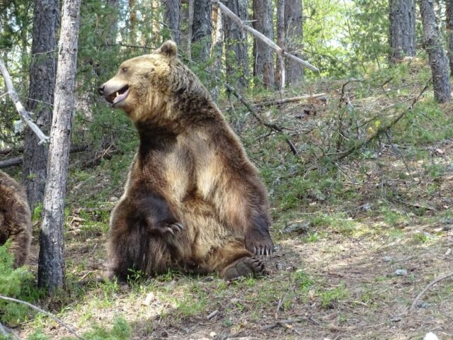Парк за танцуващи мечки Белица