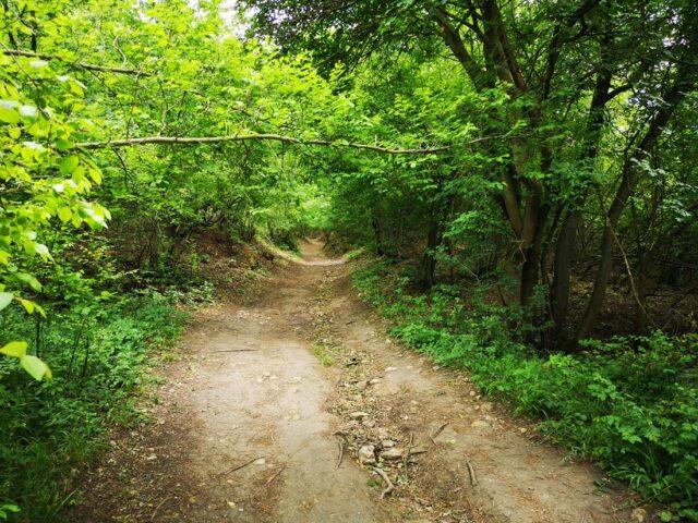 пътека към Петрич кале