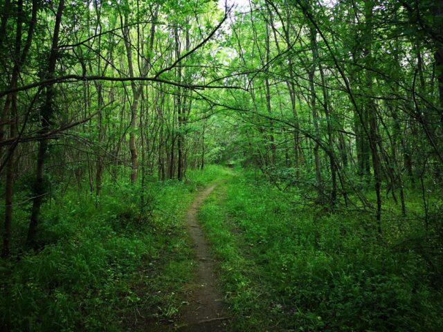 пътека към гледка Велека